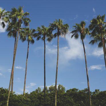 orlando-tropical-palm-tree